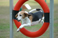 The Mental Game of Dog Agility
